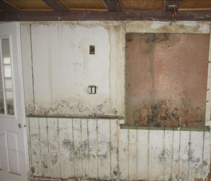 Mold Remediation Does Your South Kenosha Home Have A Mold Problem?
